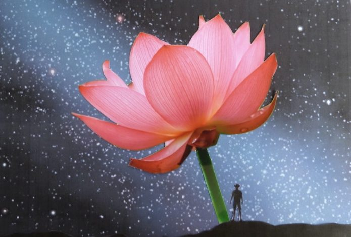 「千年の花」イメージ